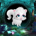 G4K Cute White Cat Rescue…