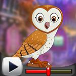 G4K Genial Barn Owl Escap…