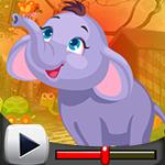 G4K Resplendent Elephant …