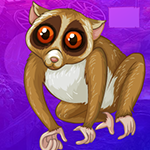 G4K Slender Loris Escape …